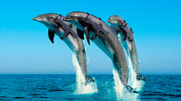 Dolphins armed
