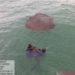 Recolhimento de óleo no mar pelos mergulhadores do Navio-Patrulha Goiana